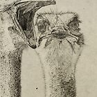 Ostriches  by NatureLover81