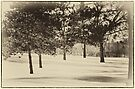 Vintage Pines by KBritt
