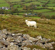 Welsh Hill Farm at Foel Drygarn Bronze Age Hillfort Wales by Kawka