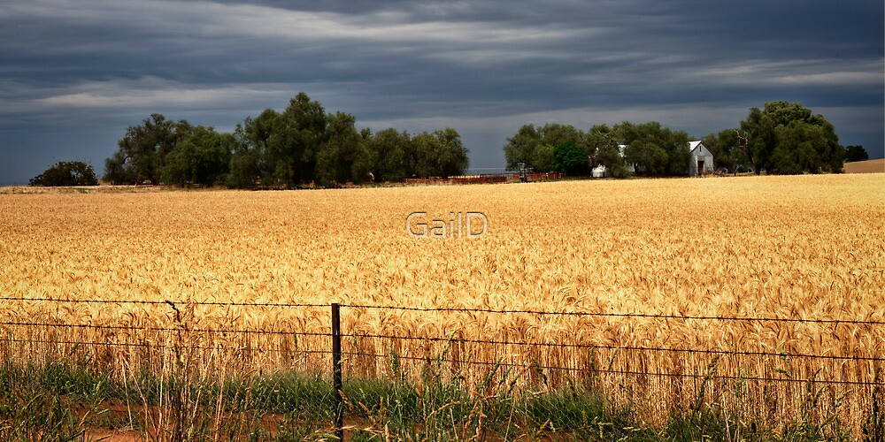 Ready for Harvest by GailD