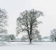 Snow Covered Treescape by SwampDogPhoto