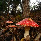 Toad Stool by Kingsleyc