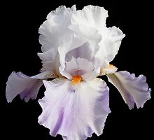 Iris on black by SeanBuckley