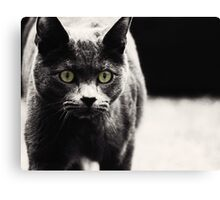 Russian Blue cat Canvas Print