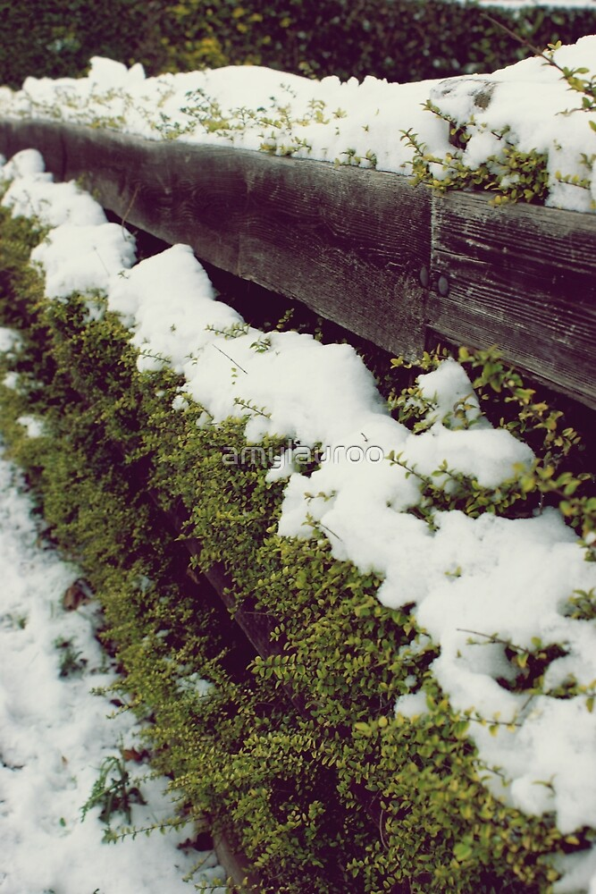 Garden fencecs by amylauroo