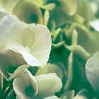 White Hydrangea Flower Bud by Elizabeth Thomas