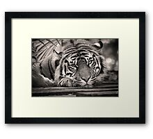 Who Turned on the Light? Framed Print
