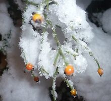 Winter Berries by Sarah Howlett