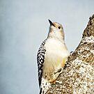 Red-Bellied Woodpecker ~ by Renee Blake