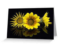 Gazania Glory Greeting Card