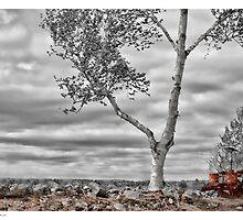 Hilltop Farm by Richard Bean