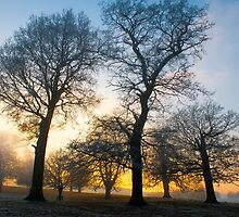 Trees at Sunset by Moments In Time Photography