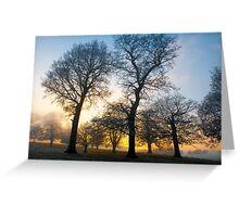 Trees at Sunset Greeting Card