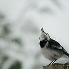catchting snowflakes.. by Steve Shand