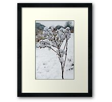 Snow Tufts Framed Print