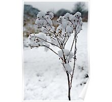 Snow Tufts Poster