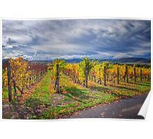 Vineyard Vibrance Poster
