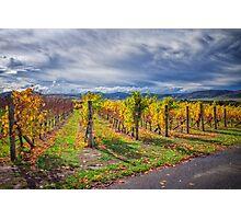 Vineyard Vibrance Photographic Print