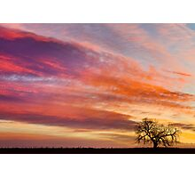 Lonesome Tree Sunrise Photographic Print