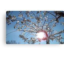 Tree Grabs The Sun  Canvas Print