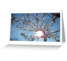 Tree Grabs The Sun  Greeting Card