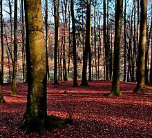 Autumn dream by Aleš Sotelšek