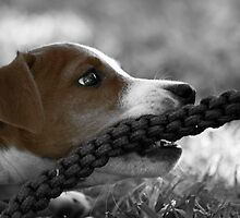 Jack and the rope... (Jack Russel)  by Qnita