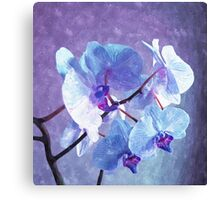 Blue Orchid-Art Prints-Mugs,Cases,Duvets,T Shirts,Stickers,etc Canvas Print