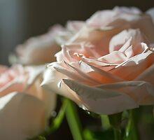 Subtle Rose 2 by Elizabeth Thomas