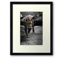 Jaguar on the Hunt Framed Print