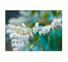 White Lily of the Valley Flower Art Print