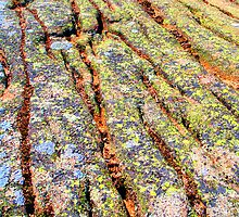 Colorful lichen, Maine coast by LichenRockArts