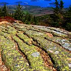 brilliant Bar Harbor, Maine coast with lichen by LichenRockArts