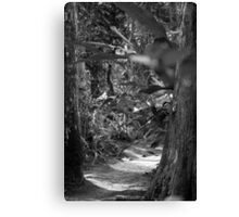 Black and White Path to Somewhere Canvas Print