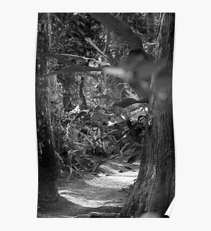 Black and White Path to Somewhere Poster