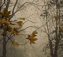 The Fog by Sabaa