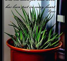 Rumi Quote - Zebra Cactus - Succulent by Barbara Griffin
