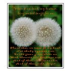 Double Wishes Quote - When I Die - Dandelion by Barbara Griffin