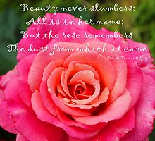 Gentle Rose Always Remembers - Rose - Quote by Barbara Griffin