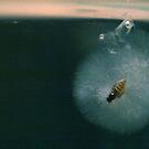 Tiny Fly by Stuart Steele