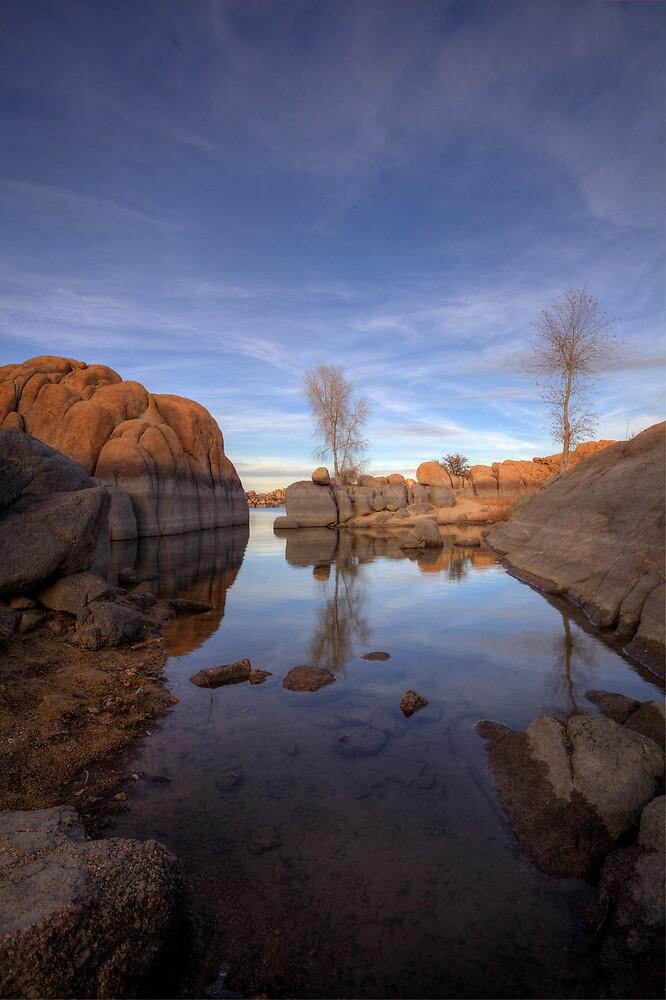 Cove Life by Bob Larson