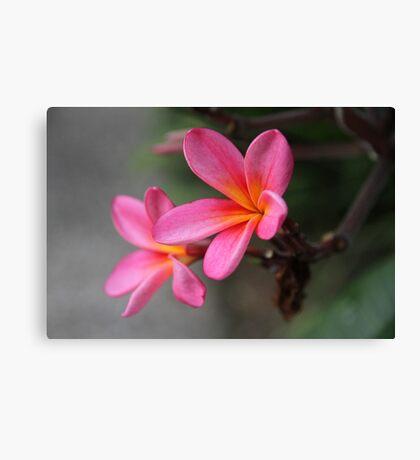 Hot Pink Frangipani Canvas Print