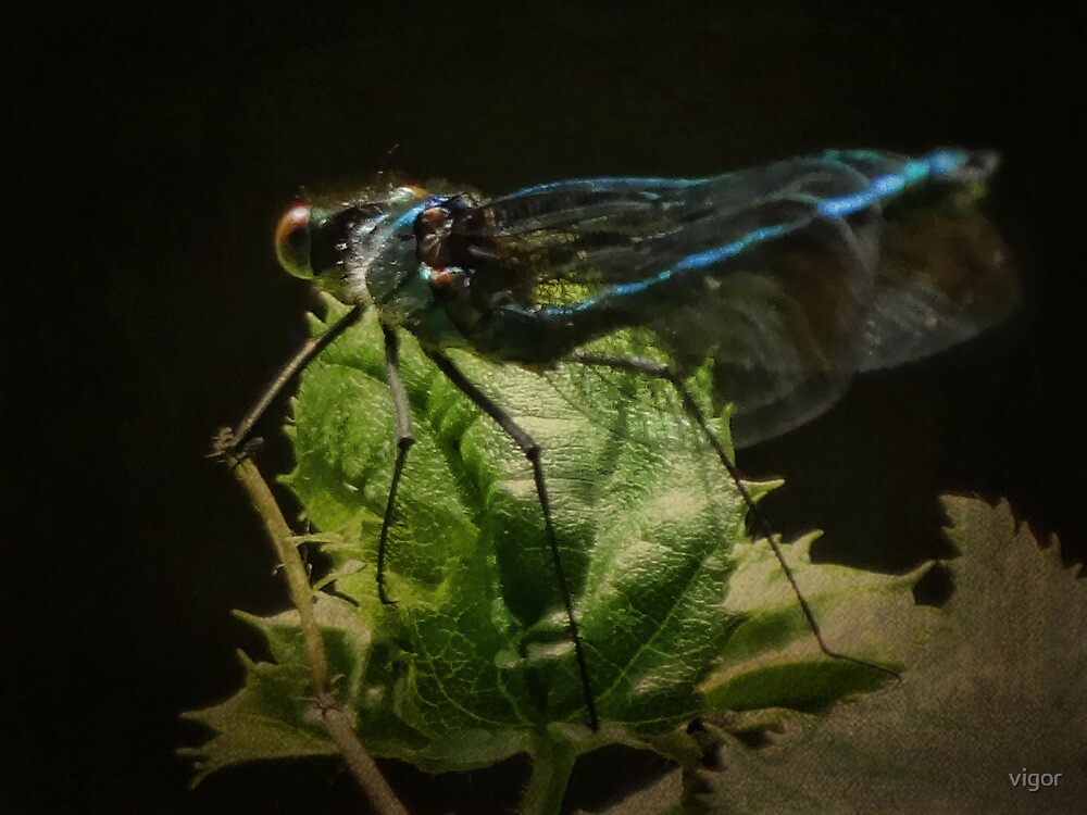 Damsel Fly by vigor