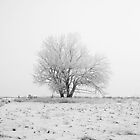Lone Snow Tree by Tobin Rogers