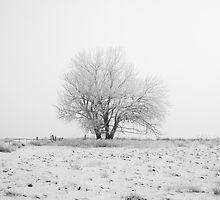 Lone Snow Tree by Tobin Rogers