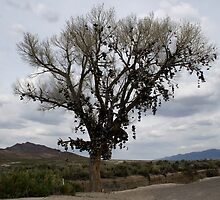 The Shoe Tree,outside Fallon Nevada,USA by Anthony & Nancy  Leake