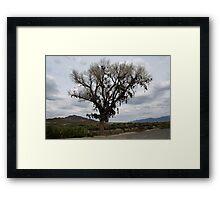The Shoe Tree,outside Fallon Nevada,USA Framed Print