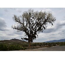 The Shoe Tree,outside Fallon Nevada,USA Photographic Print