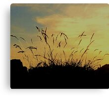 An Evening Sky With Grasses Canvas Print
