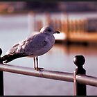 Guarding the Bay by WeeZie
